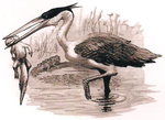 Great Grey Heron.png