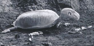 Skeleturtle in Mothra vs. Godzilla