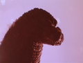 GVMTBFE - Godzilla Comes from the Fuji Volcano - 10.png