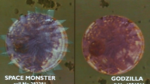 GVSG - G cells compared to SupeGoji cells.png