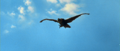 All Monsters Attack - Giant Condor flies in while in stock footage form 4.png