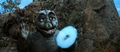 All Monsters Attack - Minya Minilla ShodaiMinira Fires Smoke Ring.png