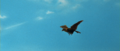 All Monsters Attack - Giant Condor flies in while in stock footage form 1.png