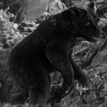 Cave bear 2.png