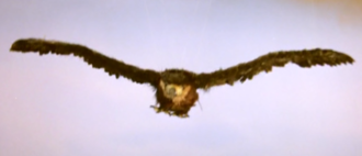 The Giant Eagle in the trailer for The Magic Serpent
