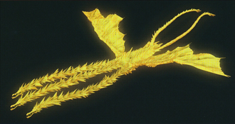 Ghidorah render for GODZILLA: The Planet Eater