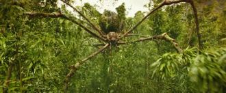 A Mother Longlegs in Kong: Skull Island