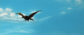 All Monsters Attack - Giant Condor flies in while in stock footage form 3.png