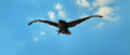 All Monsters Attack - Giant Condor flies in while in stock footage form 5.png